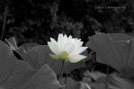 源久寺 040_edited-1.jpg