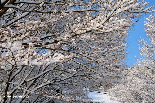 雪の両足寺07.jpg