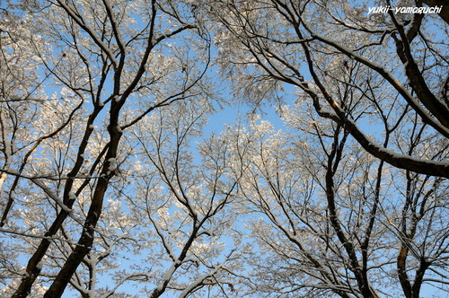 雪の両足寺09.jpg