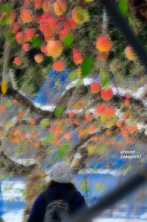 りんご園09.jpg