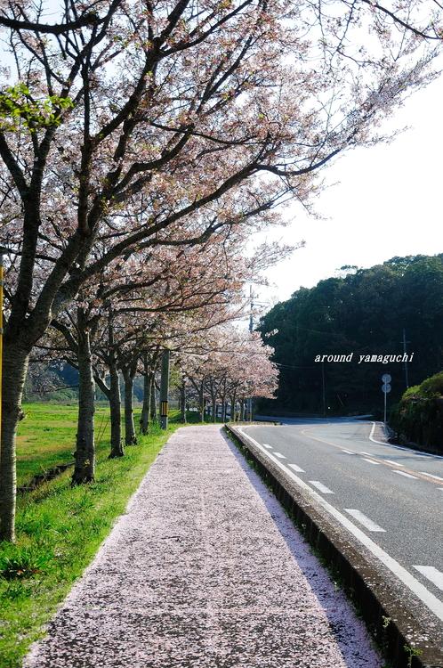 江汐公園11.jpg