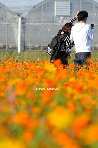 花の海13.jpg