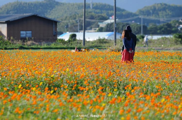 花の海16.jpg