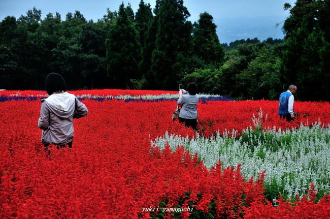 花公園04.jpg