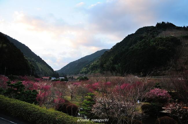 萩梅林園01.jpg