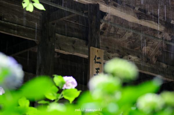 雨の阿弥陀寺02.jpg