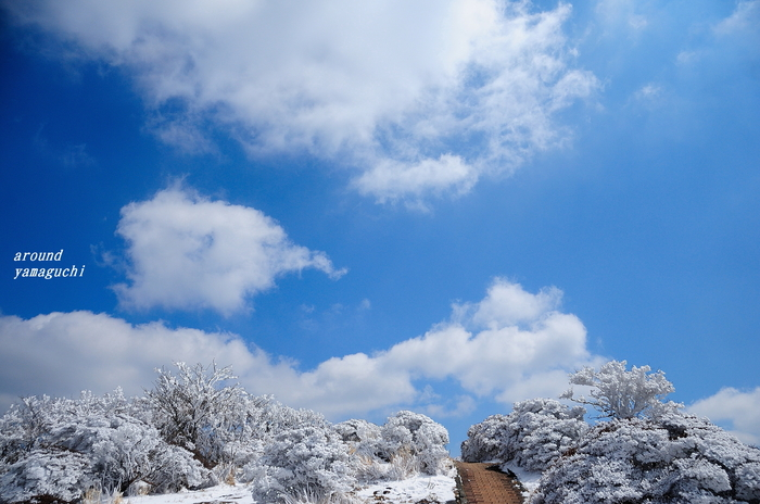 鶴見岳霧氷08.jpg