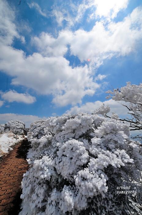 鶴見岳霧氷20.jpg
