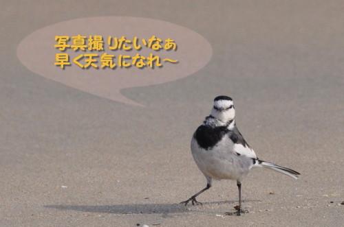 ネタ探し中_1.jpg