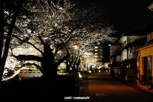 一の坂川02.jpg