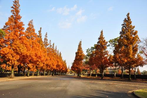 恩田運動公園002.jpg