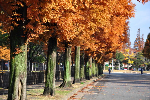 恩田運動公園004.jpg