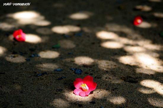 笠山椿祭り03.jpg