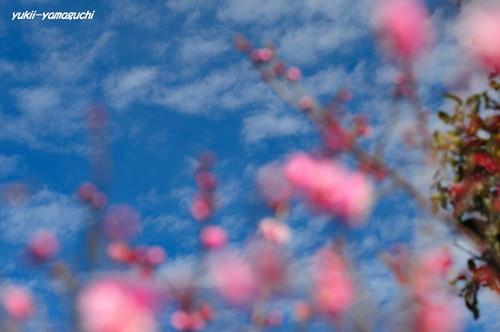 冠梅園0127-05.jpg