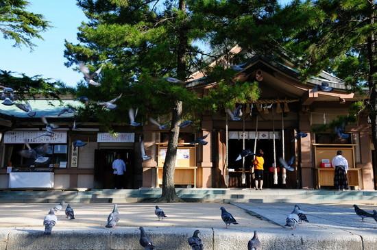 亀山八幡宮おかめ桜 072.JPG