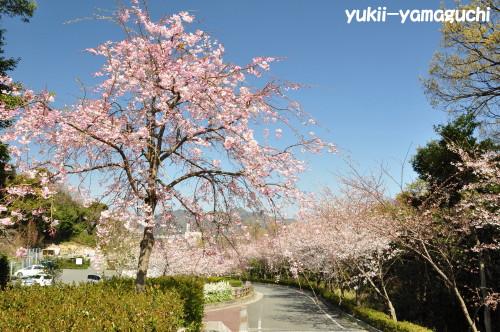 桑山公園01.jpg
