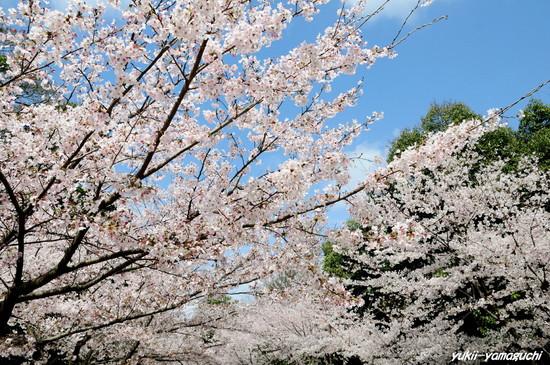 桑山公園04.jpg