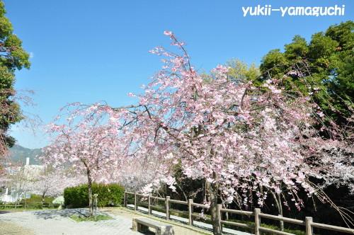 桑山公園06.jpg