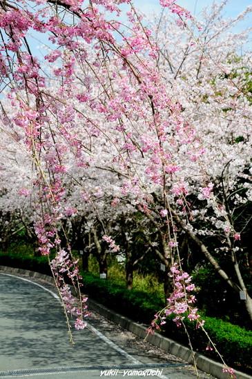 桑山公園10.jpg