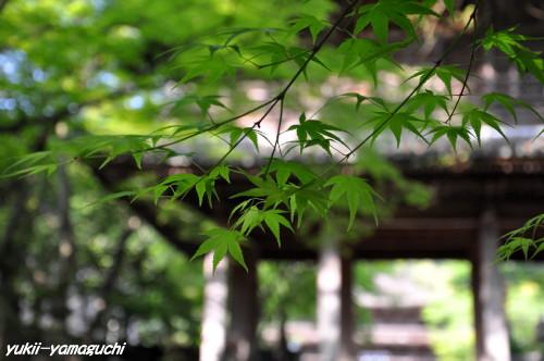 功山寺新緑03.jpg