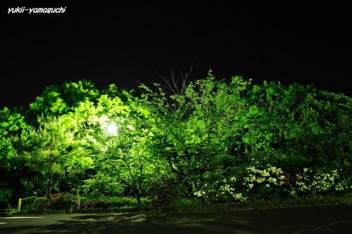 江汐・夜03.jpg