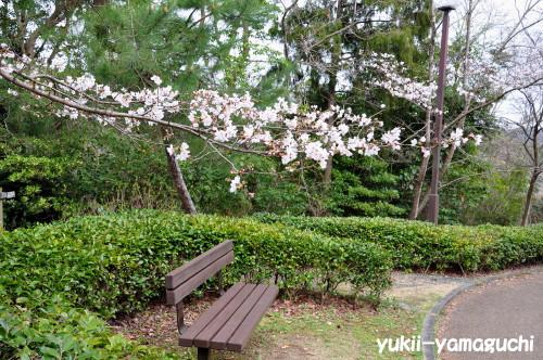 江汐公園桜03.jpg