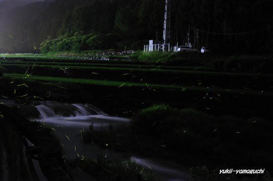 三谷ホタル062604.jpg