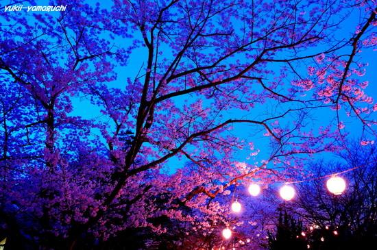 若山公園提灯01.jpg
