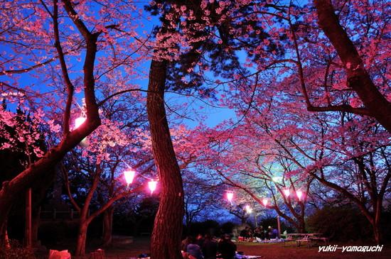 若山公園提灯03.jpg