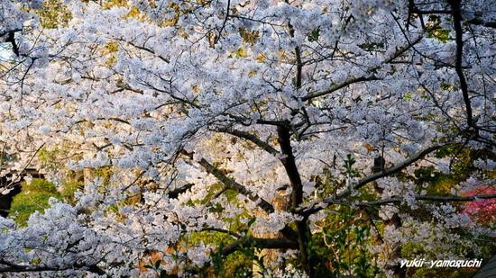 若山公園提灯12.jpg