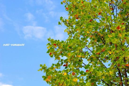 秋の気配01.jpg