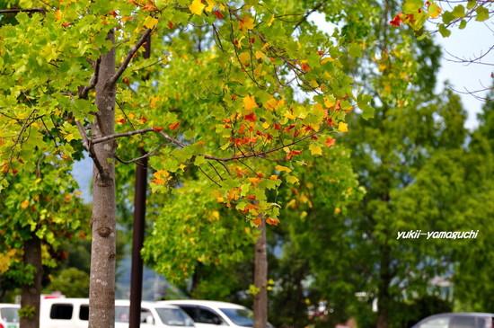 秋の気配02.jpg