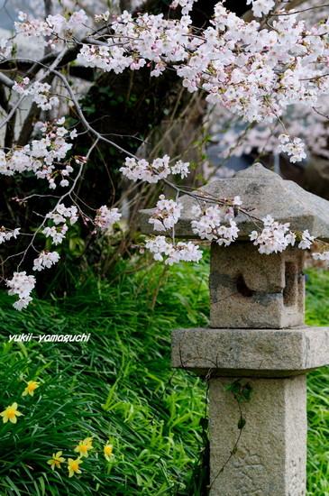 小鯖八幡宮05.jpg