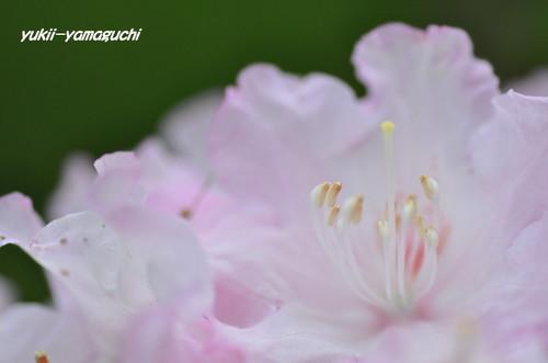 石楠花園03.jpg