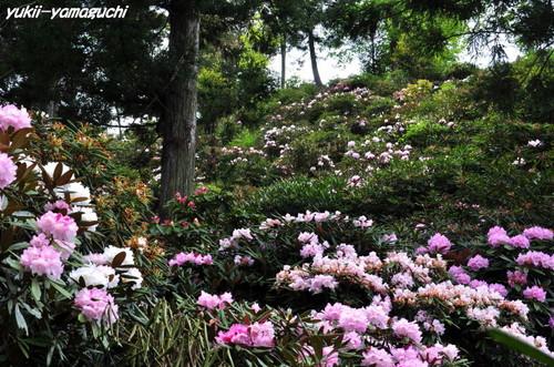 石楠花園07.jpg