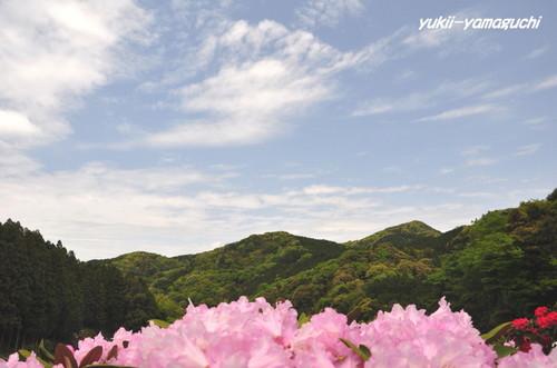 石楠花園11.jpg
