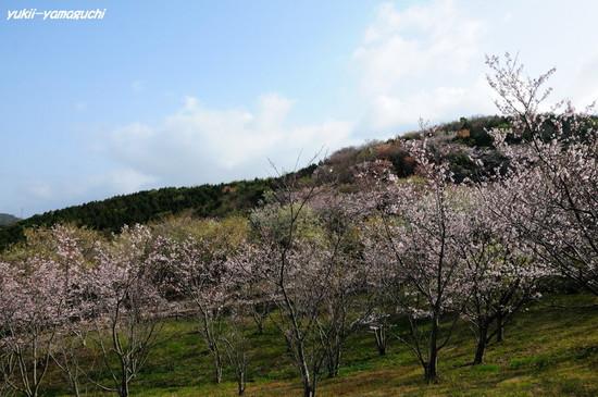 草山公園01.jpg