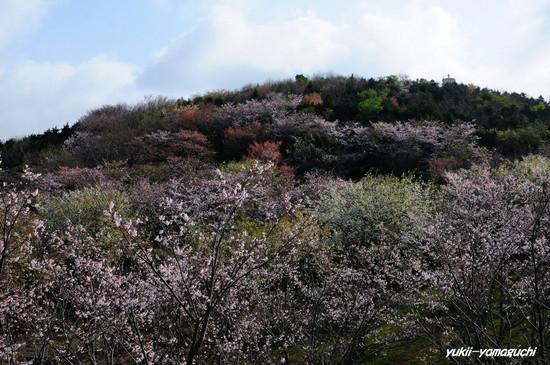草山公園02.jpg