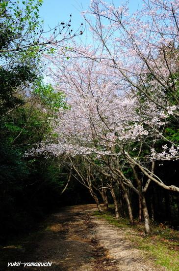 草山公園06.jpg