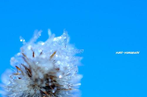 霜08.jpg