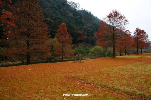 大原湖のカモ04.jpg