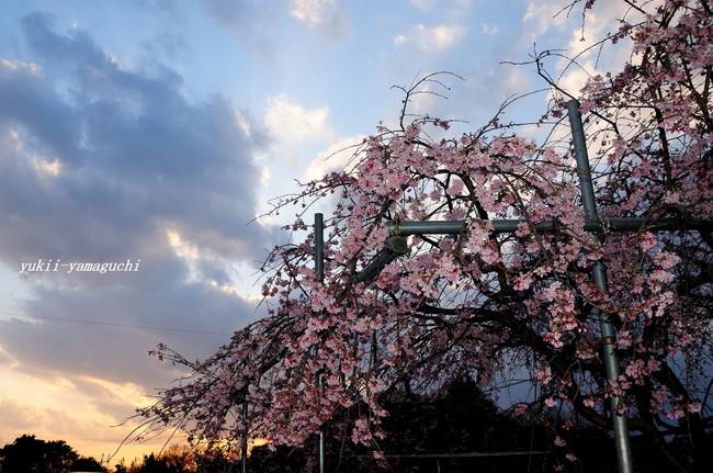 熊野神社01.jpg