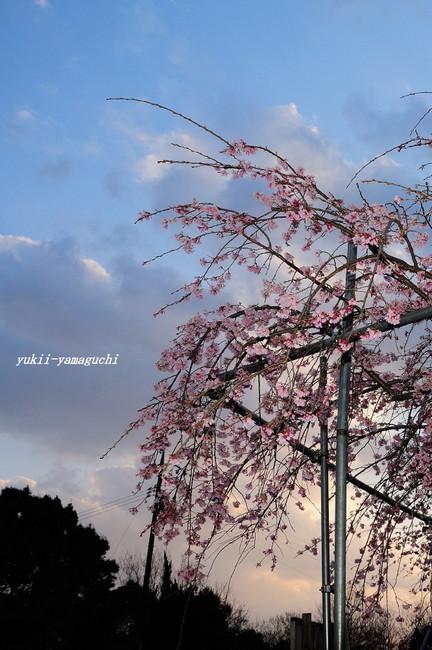 熊野神社02.jpg