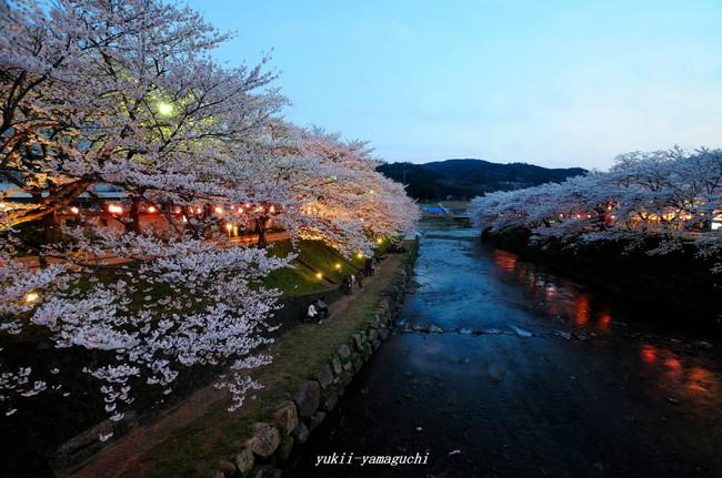 美祢桜ライトアップ01.jpg