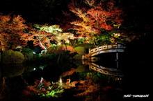 長府庭園灯りの祭典01.jpg