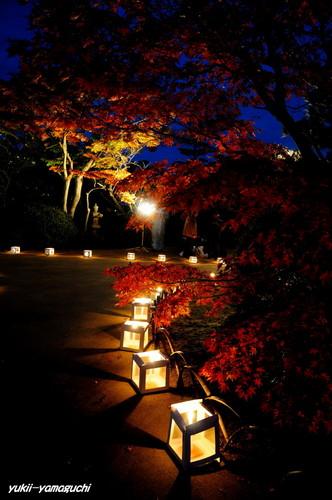 長府庭園灯りの祭典05.jpg