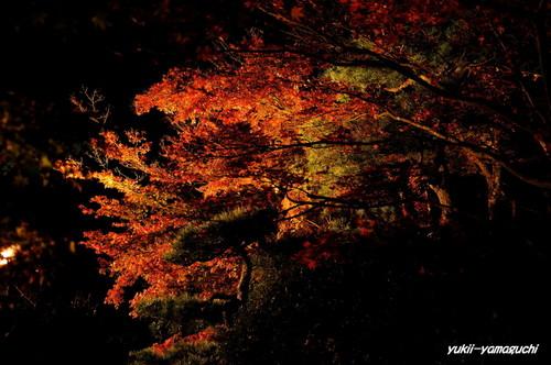 長府庭園灯りの祭典09.jpg