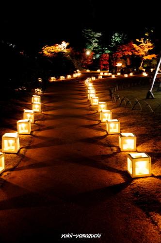 長府庭園灯りの祭典10.jpg