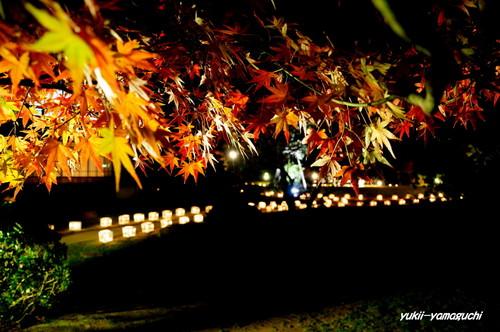 長府庭園灯りの祭典12.jpg