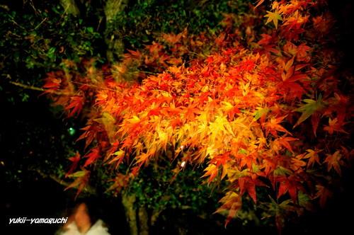 長府庭園灯りの祭典13.jpg